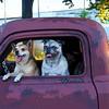 Doggies 9471-2 8x12 copy