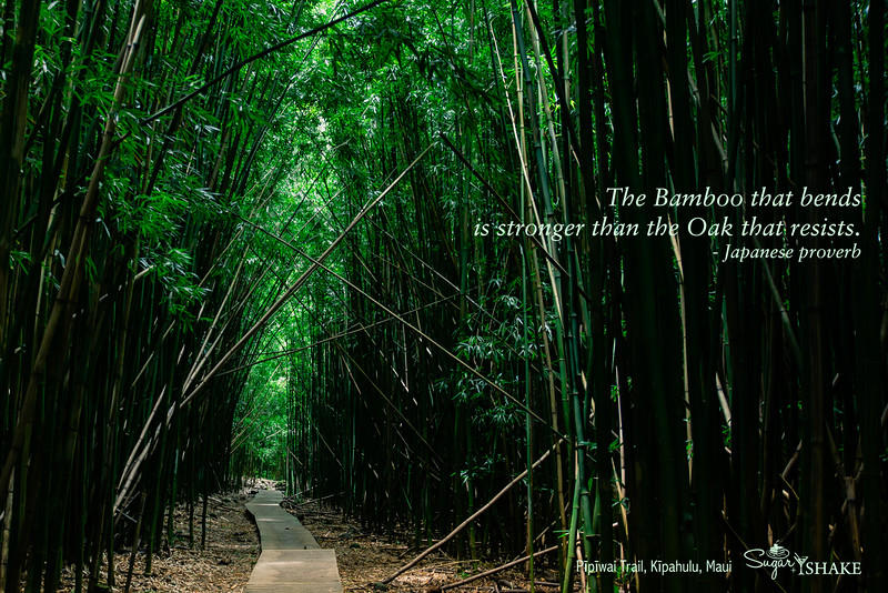 """""""The Bamboo that bends is stronger than the Oak that resists."""" (Japanese proverb) Pīpīwai Trail, Kīpahulu, Maui. © 2015 Sugar + Shake"""