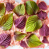 Shiso and pork, layered and ready to roll up.  © 2021 Sugar + Shake