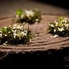 Vintage Cave. Amuse bouche: Seaweed with lilikoi bubbles and hazelnut dust. © 2014 Sugar + Shake