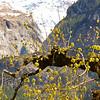 Montanhas ao Redor de Grindelwald