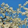 Duillier - Pleins feux sur le printemps