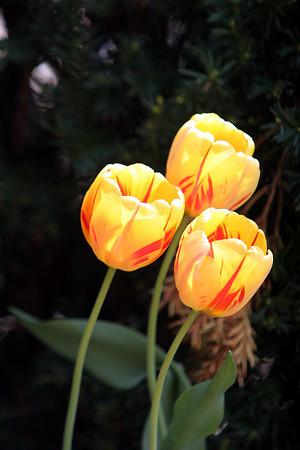05-05-09  imag 016