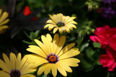 05-13-07 Flowers 116