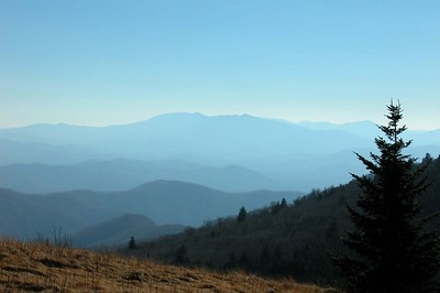 This was taken on the Appalacian Tail at Roan Mountain Park, Tenneessee