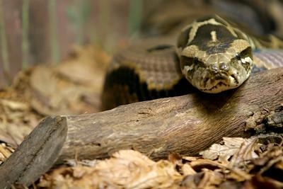 02-04-06 Reptile Shoot Toledo Zoo 267