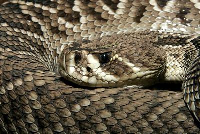 02-04-06 Reptile Shoot Toledo Zoo 153