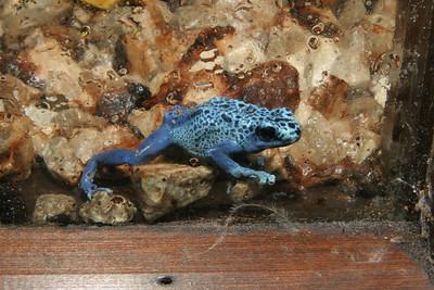 02-04-06 Reptile Shoot Toledo Zoo 146