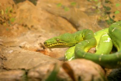 02-04-06 Reptile Shoot Toledo Zoo 272