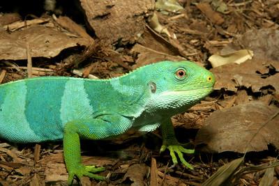 02-04-06 Reptile Shoot Toledo Zoo 132