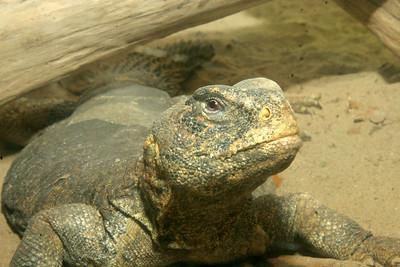 02-04-06 Reptile Shoot Toledo Zoo 122