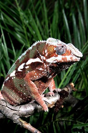 02-04-06 Reptile Shoot Toledo Zoo 020