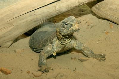 02-04-06 Reptile Shoot Toledo Zoo 127