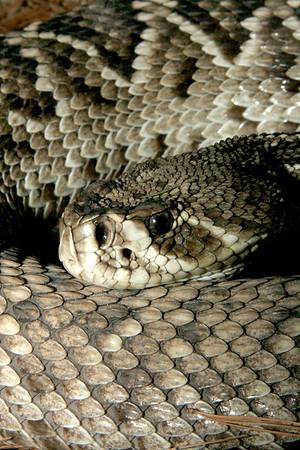 02-04-06 Reptile Shoot Toledo Zoo 154