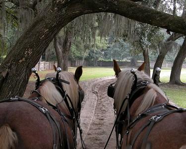 Midlothian Plantation, outside Charleston, South Carolina