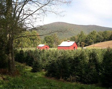 On the Creeper Trail, Abingdon, Virginia