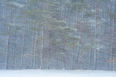 """""""Śnieżyca"""""""