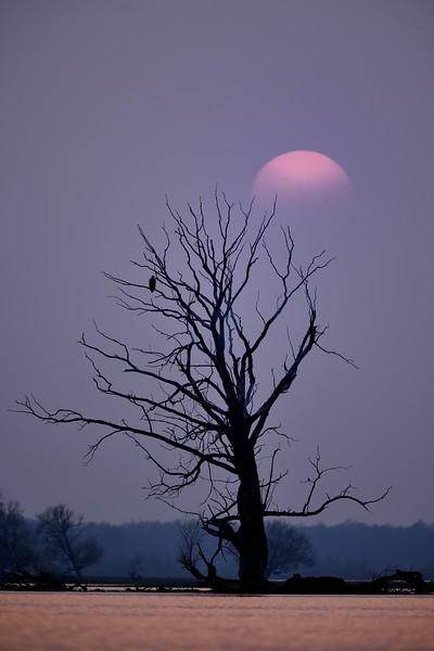 """Zachód słońca nad """"bielikowym drzewem"""""""