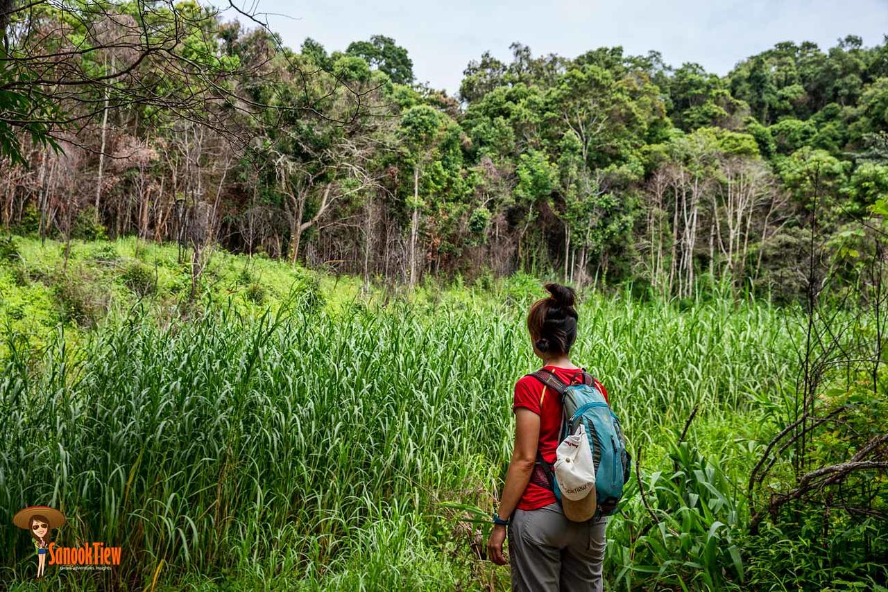จากจุดนี้ อีก 200 เมตร ก็ถึง ยอดเขาหลวง แล้วค่ะ เดินป่าเขาหลวงสุโขทัย ขึ้นเขาหลวงสุโขทัย