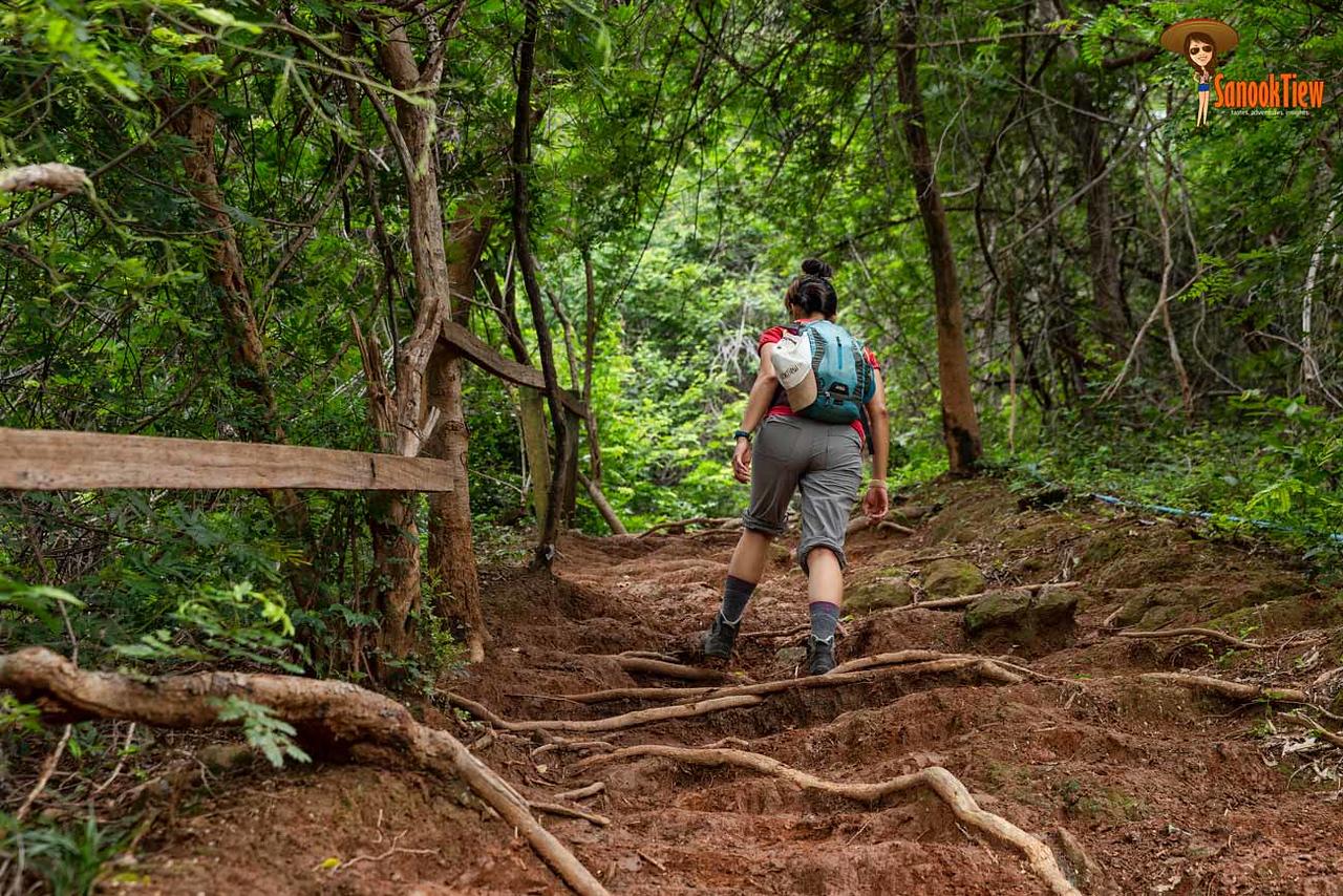 ขึ้น ยอดเขาหลวง เดินป่าเขาหลวงสุโขทัย ขึ้นเขาหลวงสุโขทัย อุทยานแห่งชาติรามคำแหง