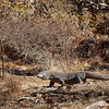 It was very dry in Komodo, and Komodo dragons were well camouflaged