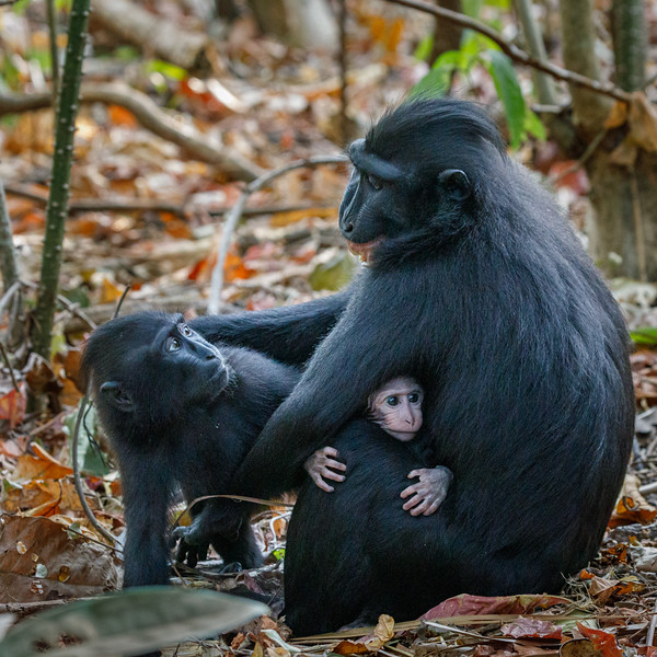 This mother is warning a youngster not to play with her baby