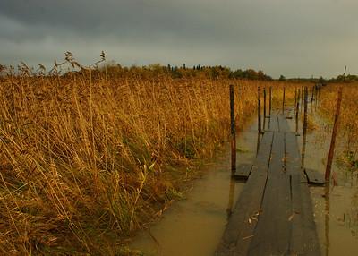 Kelluvat pitkospuut. Pitkospuita pääsee Helsingin Lammassaareen. Astuessa pitkospuille ne upposivat pahimmillaan 30 cm.