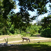 Zebra View