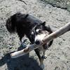 """I found a stick. Can I keep it?"""