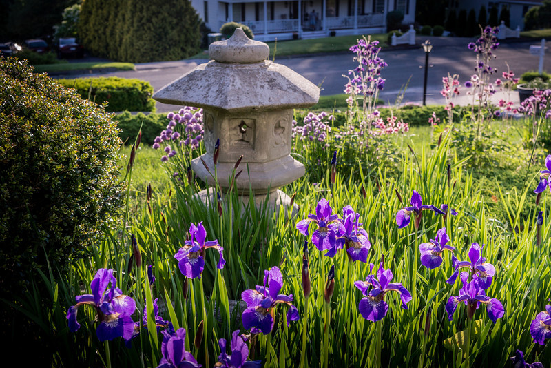Irises and Lantern.dng