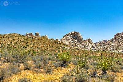 Mojave Desert, California.