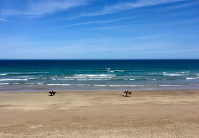 Horses on Wainui Beach