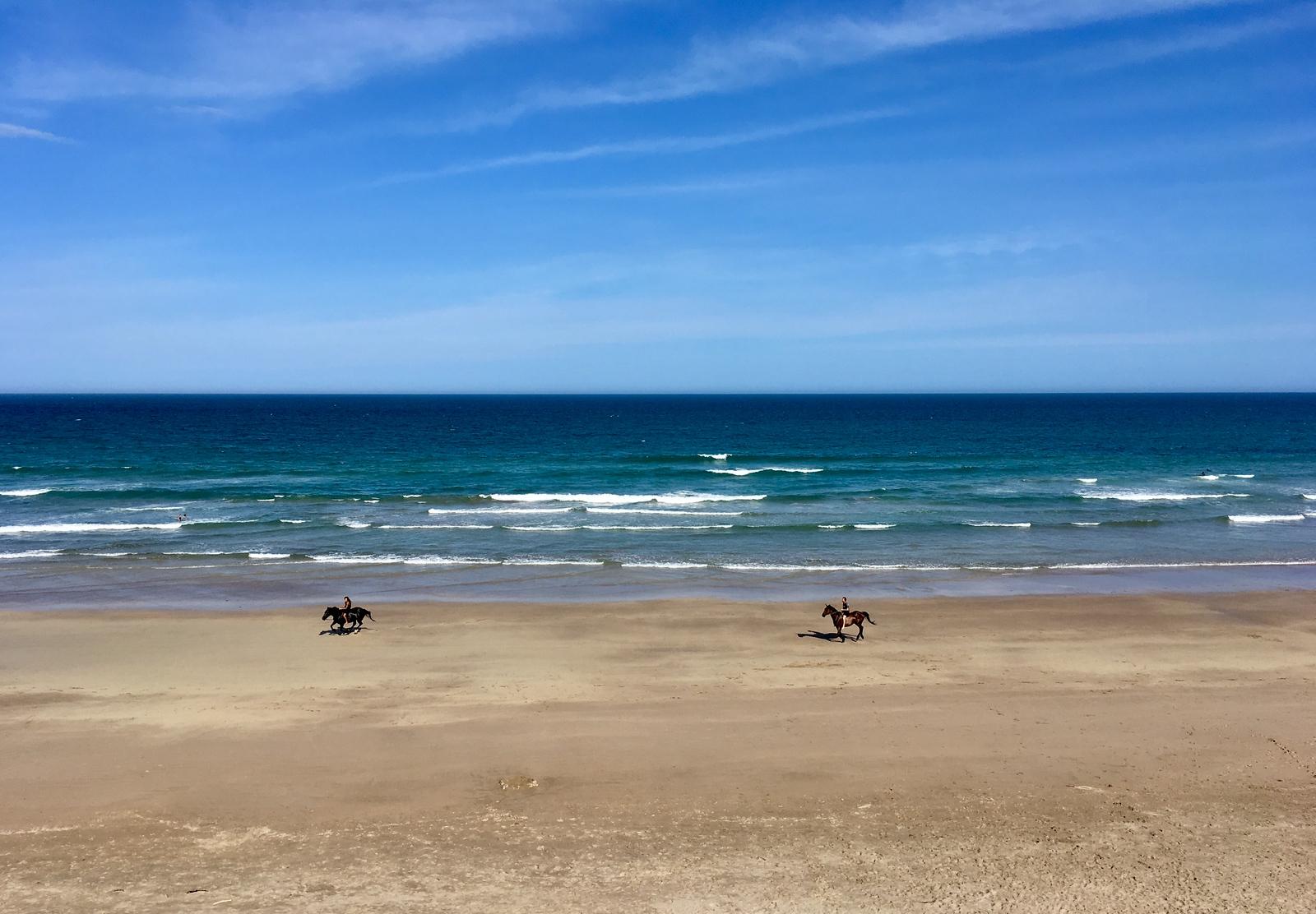 Horses on Wainui Beach