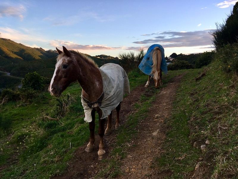 Horses at Tawatawa