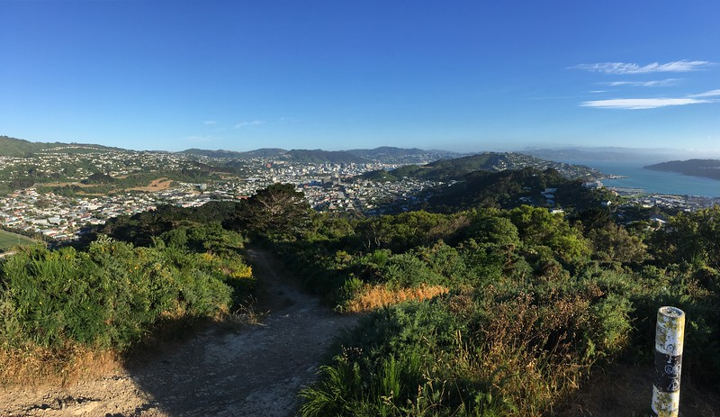 Mt Albert Trails