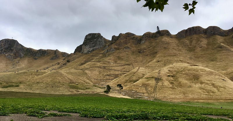 Disappearing Te Mata Peak trail...