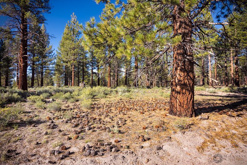 Mono pines camp, Mono County, California.  June 14, 2017.