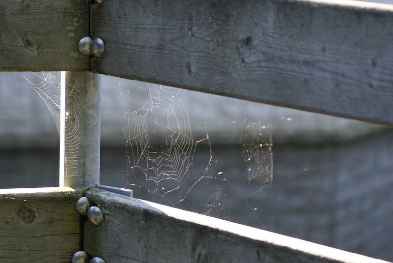 Mill Pond Dorchester On