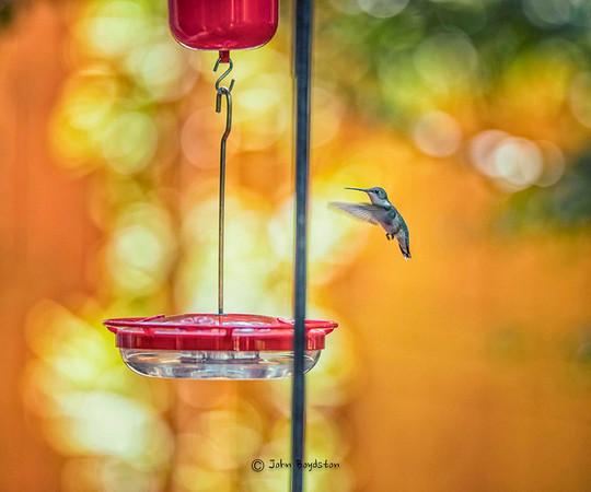 Summer Birds in the Backyard