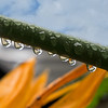 Rain drops 4 DSC00315 3667x4000 jpg