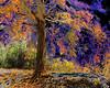 Treesunclrd13e810