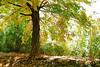 treesunclrd13py46