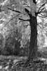 treesunclrd13pybw46
