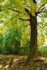 treesunclrd13pyv