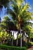 Tall Palms Diria_009