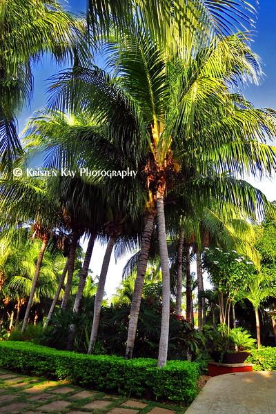 Tall Palms Diria_008