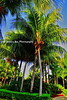 Tall Palms Diria_007
