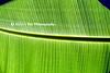 CR Leaf D_001