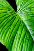 CR Leaf F