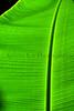 CR Leaf D_002